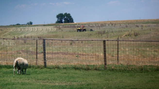 SheepBackyard_RandyMowingPasture_01_compressed