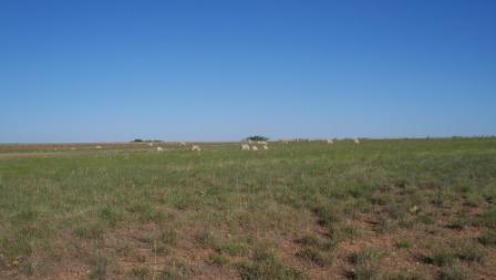 SheepOnPasture_02_compressed