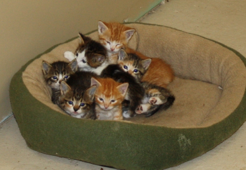Kittens_01_cropped