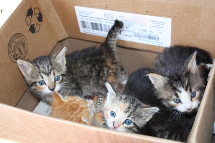 Kittens_6of7_01