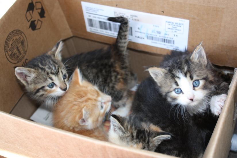 Kittens_6of7_02